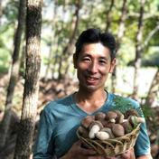 【森から育てる香る木の子】肉厚・軸太・濃厚な原木しいたけ 2kg 果物や野菜などのお取り寄せ宅配食材通販産地直送アウル