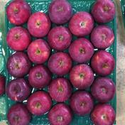 スターキング23玉5㎏ 5.2kg 果物や野菜などのお取り寄せ宅配食材通販産地直送アウル