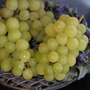 完熟シャインマスカット(訳あり) 2kg 果物や野菜などのお取り寄せ宅配食材通販産地直送アウル