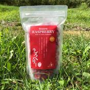 無農薬栽培 珍しい国産のラズベリー 500g 果物 通販