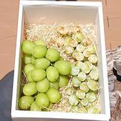 「種ありシャインマスカット」「種なしシャインマスカット」食べ比べセット 2 果物や野菜などのお取り寄せ宅配食材通販産地直送アウル