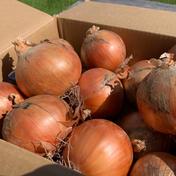 《北海道中富良野産》玉ねぎ 10kg 10kg 果物や野菜などのお取り寄せ宅配食材通販産地直送アウル
