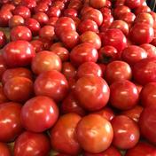 石井農園完熟トマト【4kg箱満杯詰め】 3.8 群馬県 通販