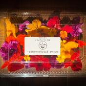 季節の彩り詰め合わせ エディブルフラワーMIX 10g 長野県 通販