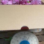 食用菊 もってのほか 1.0kg 神奈川県 通販