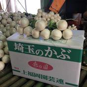 甘くて美味しい‼️彩の国のかぶ 1束3玉5束 (約3キロ) 埼玉県 通販
