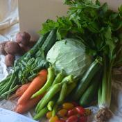 【鮮度抜群!】さいのね畑の野菜セット[大](農薬・化学肥料不使用) 季節のお野菜約10品 ※3〜4人家族の1週間分の量を想定 果物や野菜などのお取り寄せ宅配食材通販産地直送アウル