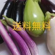 片山農園 【訳あり】7本 送料無料 ナス多種詰め合わせ😂(キズあり) 1.5㎏