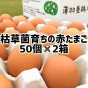 【枯草菌・赤たまご50個×2箱】枯草菌・赤卵100個 100個 果物や野菜などのお取り寄せ宅配食材通販産地直送アウル