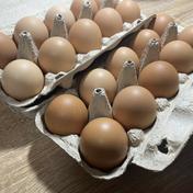 卵かけご飯に最高!平飼い 新鮮たまご 元気玉【20個】 約1kg 卵(鶏卵) 通販