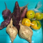 さつまいも(2種)と早生みかん🍊のセット 約2kg(箱込み) 果物や野菜などのお取り寄せ宅配食材通販産地直送アウル