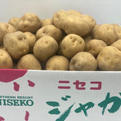 男爵(だんしゃく)いも Lサイズ じゃがいも 10キロ 北海道 ニセコ 10キロ 果物や野菜などのお取り寄せ宅配食材通販産地直送アウル