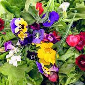 植物工場産 栽培期間中農薬不使用 彩りサラダセット 各1個ずつ 埼玉県 通販
