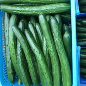 新鮮きゅうりAL品 大きくて太く食べ応えあり 朝採り野菜 2kg 福島県 通販