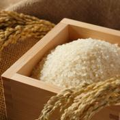 【大特価】特別栽培ゆめぴりか15kg 15kg 北海道 通販