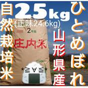 自然栽培 お米の旨味たっぷり氷温熟成 ひとめぼれ 令和2年産 山形県産 庄内産 庄内米 玄米25kg(正味24.6kg) 24.6kg 米(玄米) 通販