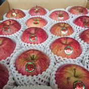 蜜入り雪完熟家庭用5kg 5kg 果物 通販