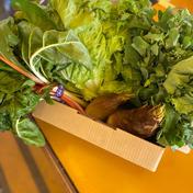 鈴木清友農園旬無農薬野菜詰め合わせ80 5.0kg 神奈川県 通販