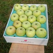 特別栽培りんご【ご家庭用】王林5キロ 5キロ(13〜20玉) 果物や野菜などのお取り寄せ宅配食材通販産地直送アウル