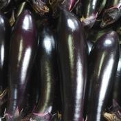 【お試し】長ナス1.5㎏~10本位😁 長ナス黒陽 1.5㎏ 野菜(茄子) 通販