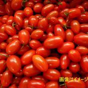 島根県江津市産☆ 訳あり フルーツミニトマト 1kg入り 1kg 島根県 通販