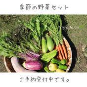 肥料、農薬不使用 季節の野菜セット 2kg 群馬県 通販