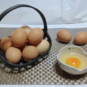 比内地鶏の屋外平飼い卵57個+3個(割れ保証) 57個+3個(割れ保証) 富山県 通販