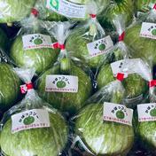 かぼっコリー 1.2kg~1.5kg 里山オーガニック農園