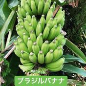寛尚ファームのバナナ2kg 2kg 果物(その他果物) 通販