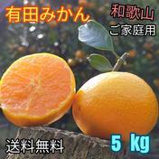 有田みかん🍊3S〜Lサイズ混合 北海道・沖縄への配送ができません。ご了承ください。 5 kg (箱込) 果物(みかん) 通販