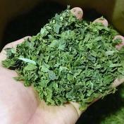 大特価 自然栽培次郎柿の葉茶 400g 400g お茶(その他のお茶) 通販
