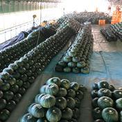 石川県珠洲市産 エビスカボチャ🎃(訳あり) 10kg 石川県 通販