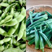 欲張り?枝豆700g➕朝採り新鮮☆オクラ300g 枝豆700g   オクラ300g(25本前後) 野菜(豆類) 通販