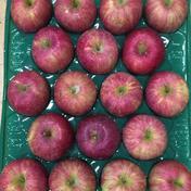紅花ふじ18玉5㎏家庭用 5.2kg 果物や野菜などのお取り寄せ宅配食材通販産地直送アウル