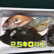 【瀬戸内海】岡山県産の鮮魚ボックス2〜4種2.5キロ以上 2.5〜4キロ。増える場合もあります 岡山県 通販