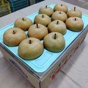 マルダイ大場農園 マルダイ大場農園の南水梨1段箱 約4.7kg(9~13個) 約4.7kg