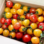 食べ比べ😋甘〜いミニトマト4種類詰め🍅 1.2kg 滋賀県 通販
