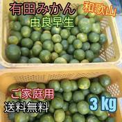 有田みかん🍊由良早生 3S〜Lサイズ混合 北海道・沖縄への配送ができません。ご了承ください。 3kg(箱込) 果物(みかん) 通販