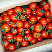 有機ミニトマト3㎏ 3㎏ 果物や野菜などのお取り寄せ宅配食材通販産地直送アウル