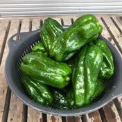 新鮮お得 4キロながねのピーマン 4キロ 野菜(その他野菜) 通販
