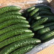 【大容量‼︎】たくろー君家のキュウリ B品 35-40本 5キロ程度 野菜(きゅうり) 通販