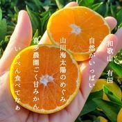 北海道沖縄の方専用 ゆら早生 10キロ 秀品 10kg 果物や野菜などのお取り寄せ宅配食材通販産地直送アウル