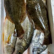 鏡の漁師の魚達! 3キロ 魚介類(セット・詰め合わせ) 通販