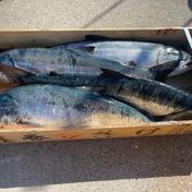アールエス商店 秋鮭、天然本マグロセット 秋鮭3キロ、マグロ赤身300g、トロ300g