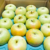 樹上完熟トキご家庭用約5キロ 約5キロ 14玉〜25玉 果物 通販