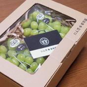 白丸ギフト 約1kg以上 葡萄 ぶどう 房ぶどう お中元 ご褒美 贈答用 贈り物 ギフト にん忍葡萄園 一箱 約1kg以上 果物(ぶどう) 通販