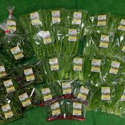 出荷直前に収穫★旬の野菜お任せ5袋❗ 5袋 大阪府 通販