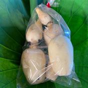 れんこん無漂白 芽バス2kg【次回9月3日発送】 一袋500g×4袋 合計2kg 野菜(蓮根) 通販