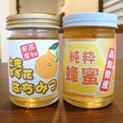 土佐の純粋はちみつ食べ比べセット 230グラム✕2本 高知県 通販