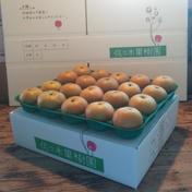 【お得な】旬の和梨5kg(小玉) 約5kg(18~20玉) 果物(梨) 通販
